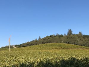 The AME Vineyard looking NNW from the South Block of Cabernet