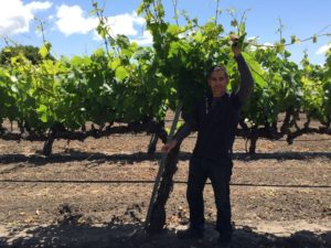 Tadeo Borchardt with a 60-year-old 'Shot-Wente' selection Chardonnay vine on the Yamakawa vineyard