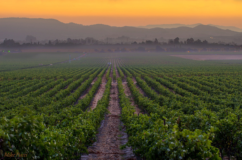 Sunset Over El Novellero Vineyard